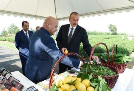 """""""Cənab Prezidentin imzaladığı Dövlət Proqramı çayçılığın sürətli inkişafında yeni mərhələ olacaqdır"""""""
